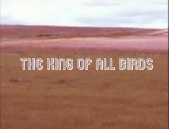 Watch Aoife O'Donovan's Lyric Video for 'The King of All Birds'